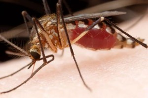 Комар кусает человека